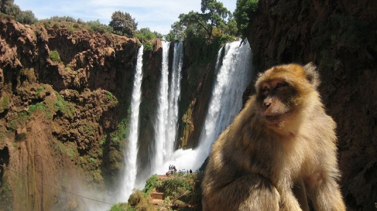 marrakech to ouzoud water falls